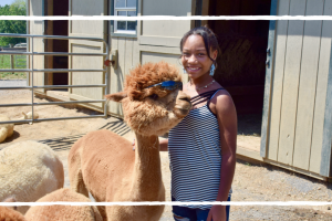 Visiting Eastland Alpacas